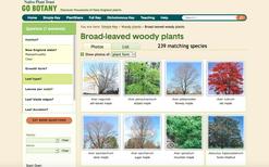 Go Botany Simple Key