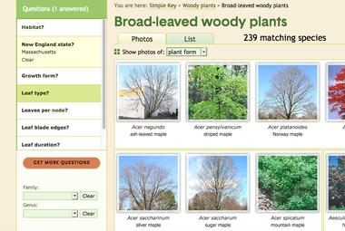 Screenshot of Go Botany simple key